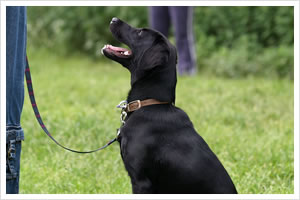 Obedience Training And Your Dog