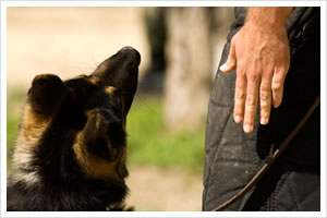 Basic Commands In Dog Training